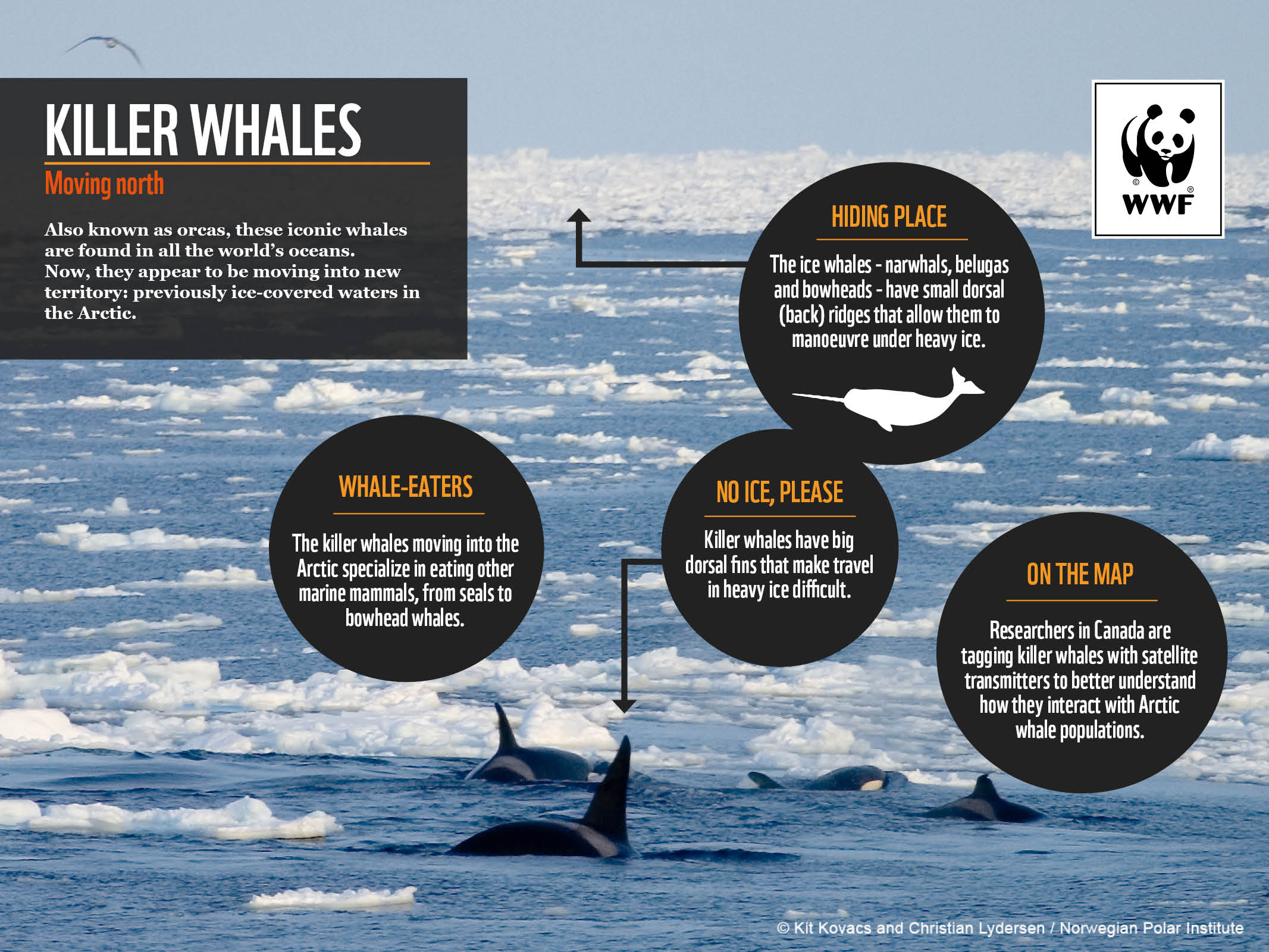 Share the Arctic | whale